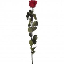 Амороза Премиум Навал 12 красный