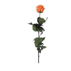 Амороза Премиум Навал 12 оранжевый
