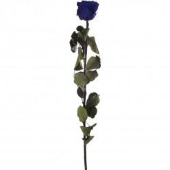 Амороза Премиум в тубе 12 синий