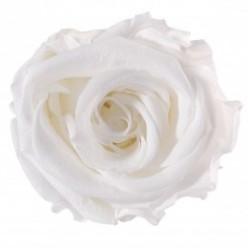 Роза Медеа 8гол. белый