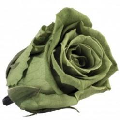 Роза Медеа 8гол. зеленый чай