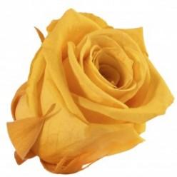 Роза Медеа 8гол. желтый