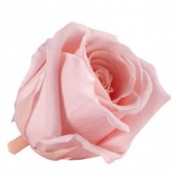 Роза Медеа 8гол. винтажный розовый