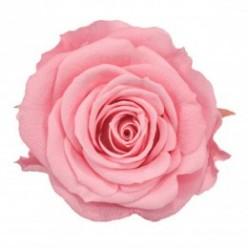 Роза Медеа 8гол. розовый светлый