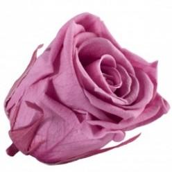 Роза Медеа 8гол. вишневый