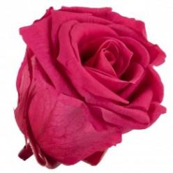 Роза Медеа 8гол. розовый