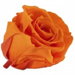 Роза Медеа 8гол. оранжевый