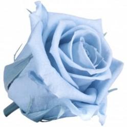 Роза Медеа 8гол. голубой