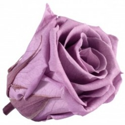 Роза Медеа 8гол. фиолетовый