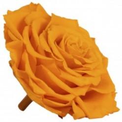 Роза король 1 гол. желтый