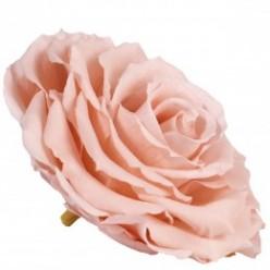 Роза король 1 гол. розовый