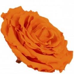 Роза король 1 гол. оранжевый
