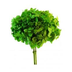 Гортензия зеленый светлый-1