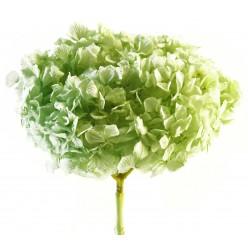 Гортензия Премиум светло-зеленый