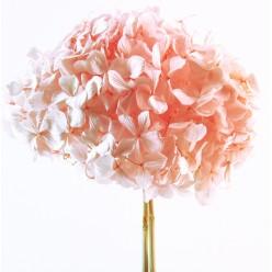 Гортензия Премиум розовый