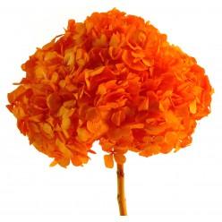 Гортензия Премиум оранжевый