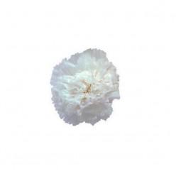 Гвоздики белый