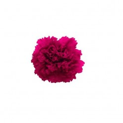 Гвоздики розовый яркий