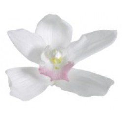 Орхидея Цимбидиум 4 гол. белый