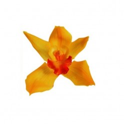 Орхидея Цимбидиум 4 гол. желтый