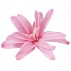 Цветок Нардос розовый