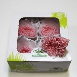 Цветок Анастасия розовый