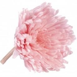 Хризантема мал. плоская светло-розовый