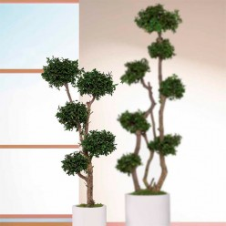 TREE 5 SPHERES TENUIFOLIUM 150 зеленый