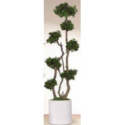 Дерево питоспорум 190см зеленый