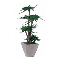 TREE JUNIPERUS GALES 100 зеленый