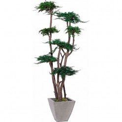 TREE JUNIPERUS GALES 160 зеленый
