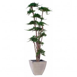 TREE JUNIPERUS GALES 190 зеленый