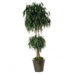 Пендула дерево грибообр