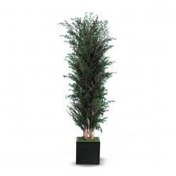 Лепто дерево ветвистое зеленый
