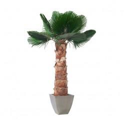 Вашингтония Пальма пордезан.лист. 190 зеленый