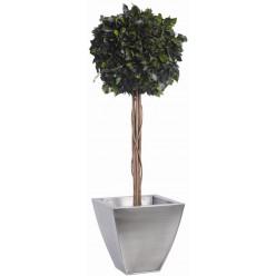 Плющ дерево ствол.шар. 30см /100