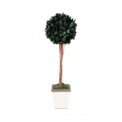 Плющ дерево ствол.шар. 45см /140