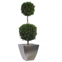 Питоспорум дерево 2шар. 45см / 140см