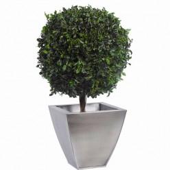 Питоспорум дерево шар. 45см / 50см