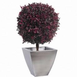 Питоспорум дерево шар. 45см