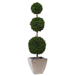 Питоспорум дерево 3шар. 20см, 30см, 45см / 170