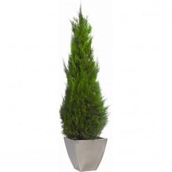 Стардаст дерево зеленый в комплекте