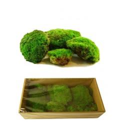 Мох шарообразный зеленый