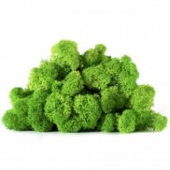 Мох ягель зеленая трава светлая коробка 500 гр
