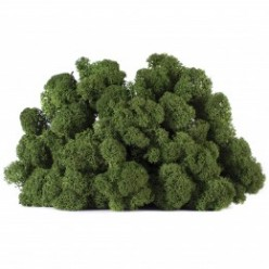 Мох ягель зеленый коробка с окном 500 гр