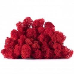 Мох ягель красный коробка 4 кг