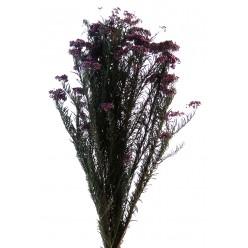 Диосми фиолетовый