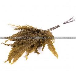 Фельсия папоротник оливковый