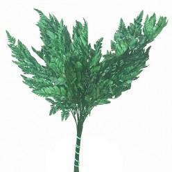 Папоротник Кожаный зеленый