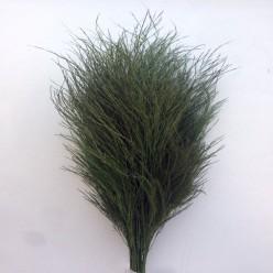 Тики зеленый